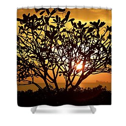 Plumeria Sunset Shower Curtain by Colleen Williams