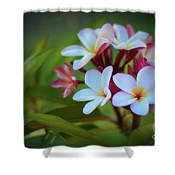 Plumeria Sunset Shower Curtain by Kelly Wade