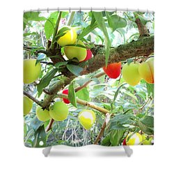 Plums On A Branch Shower Curtain
