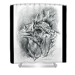 Shower Curtain featuring the drawing Plymouth Barred Rock Hen In Charcoal by MM Anderson