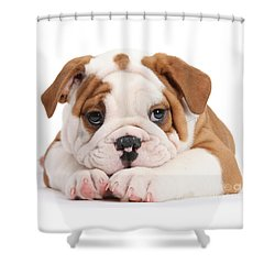 Po-faced Bulldog Shower Curtain