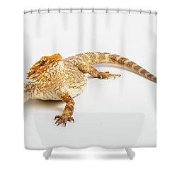 Pogona Isolated Shower Curtain