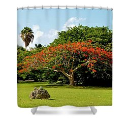 Poinciana Shower Curtain