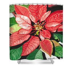 Poinsettia, Star Of Bethlehem Shower Curtain