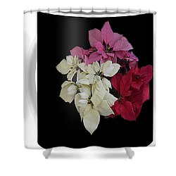 Poinsettia Tricolor Mug  Shower Curtain