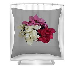 Poinsettias Pillow Grey Background  Shower Curtain