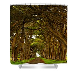 Point Reyes Cypress Tunnel Shower Curtain