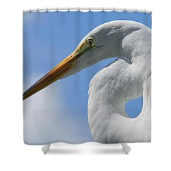 Pointed Curves Shower Curtain by Christopher Holmes