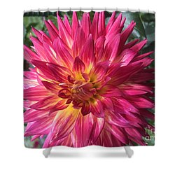 Pointed Dahlia Shower Curtain