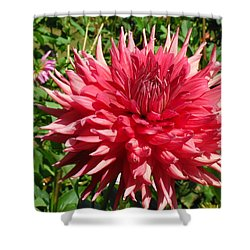 Pointed Pink Dahlia  Shower Curtain