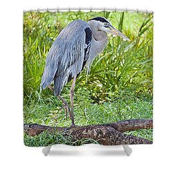 Poised And Focused Shower Curtain