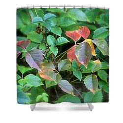 Poison Ivy In August Shower Curtain