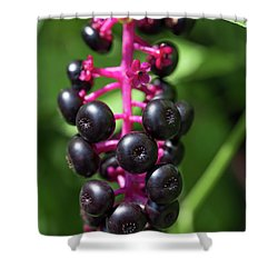 Pokeweed Cluster Shower Curtain
