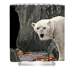 Polar Bear 101 Shower Curtain by Diana Angstadt