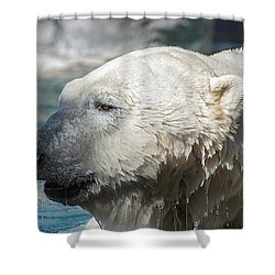 Polar Bear Club Shower Curtain