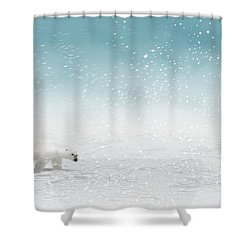 Polar Bear In Snow Shower Curtain by John Wills