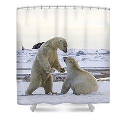 Polar Bear Play-fighting Shower Curtain