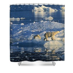 Polar Bear Ursus Maritimus Adult Shower Curtain by Rinie Van Meurs