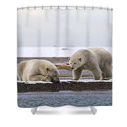 Polar Bear Zzzzzzz's Shower Curtain