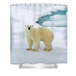 Polar Gaze Shower Curtain