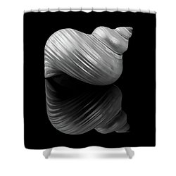 Polished Turban Shell And Reflection Shower Curtain by Jim Hughes