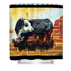 Shower Curtain featuring the drawing Polled Hereford Bull  by Larry Campbell