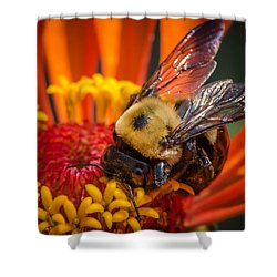 Pollen Plenty Shower Curtain by Bruce Pritchett
