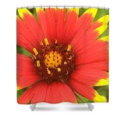 Pollinated Shower Curtain