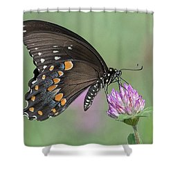 Pollinating #1 Shower Curtain by Wade Aiken