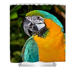 Polly II Shower Curtain