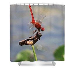 Pond Ballerina Shower Curtain by Carol Groenen