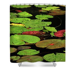 Pond Pads Shower Curtain by Karol Livote