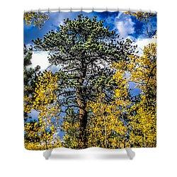 Ponderosa  Tree In The Aspens Of Fall Colorado Shower Curtain