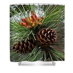 Ponderosa Pine Cones Shower Curtain