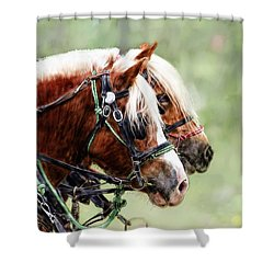 Ponies In Harness Shower Curtain