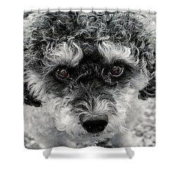 Poodle Eyes Shower Curtain
