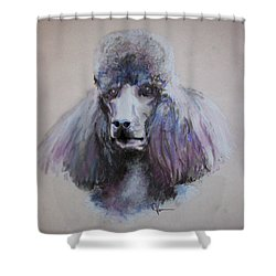 Poodle In Blue Shower Curtain