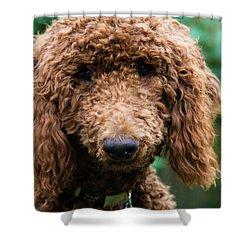 Poodle Pup Shower Curtain