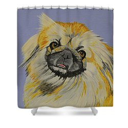 Poopan The Pekingese Shower Curtain