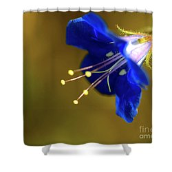 Poorman's Weatherglass  Shower Curtain