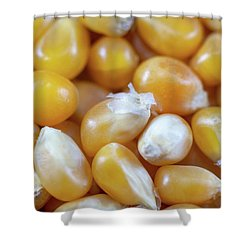 Popcorn Kernels Shower Curtain