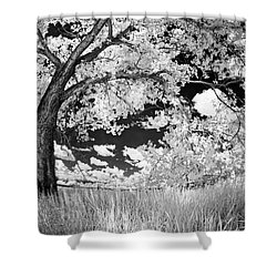 Shower Curtain featuring the photograph Poplar On The Edge Of A Field by Dan Jurak