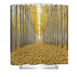 Poplar Tree Farm One Foggy Morning In Fall Season Shower Curtain