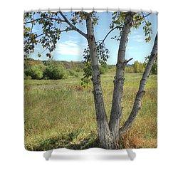 Poplar Tree In Autumn Meadow Shower Curtain