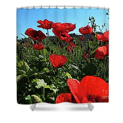 Poppies. Shower Curtain by Don Pedro De Gracia