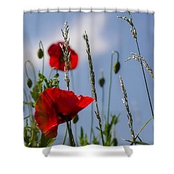 Poppies In The Skies Shower Curtain