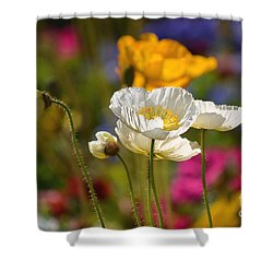 Poppies In The Spring Shower Curtain