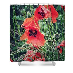 Shower Curtain featuring the photograph Poppies by Karen Stahlros