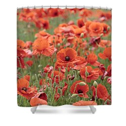 Poppies Shower Curtain by Phil Crean