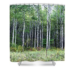 Popple Trees Shower Curtain by Susan Crossman Buscho